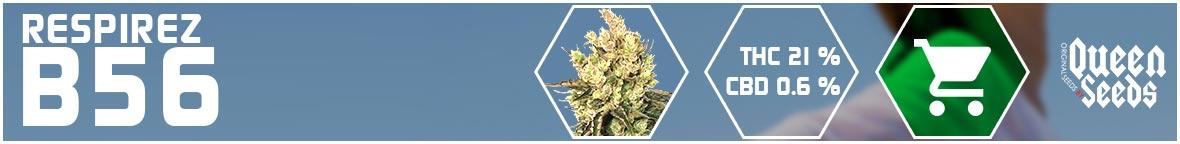 graines asthme cannabis b56