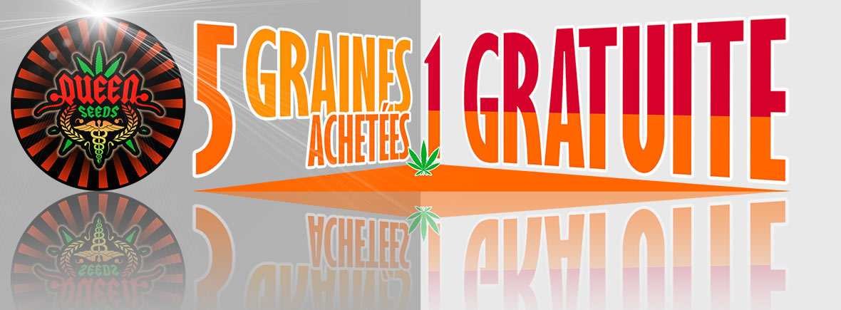 graines cannabis gratuties