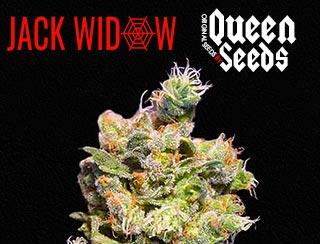 Jack Widow #2