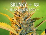 graine de cannabis - skunky+