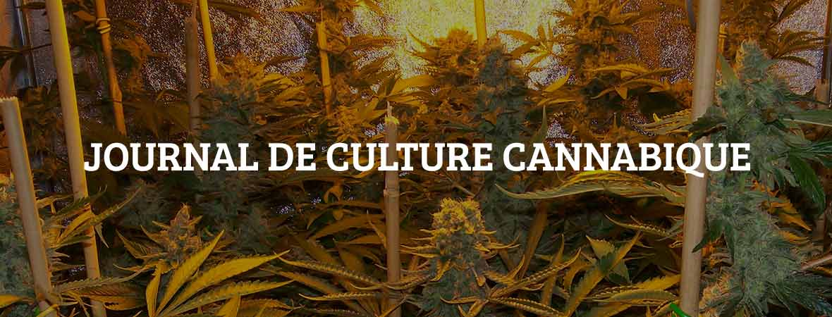 Journal de culture cannabique