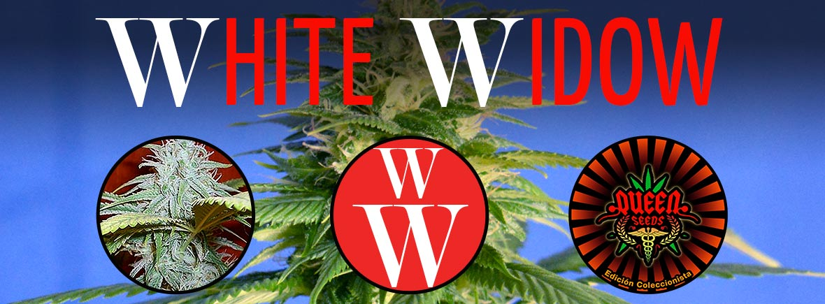 White Widow - Queen Seeds