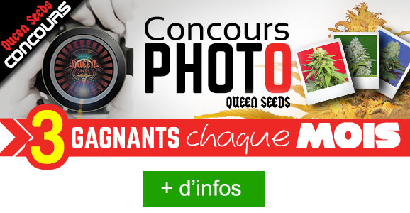 concours photo queen seeds