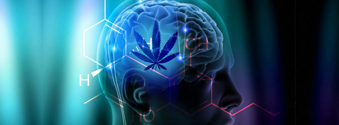 maladie de parkinson desease cannabis marijuana