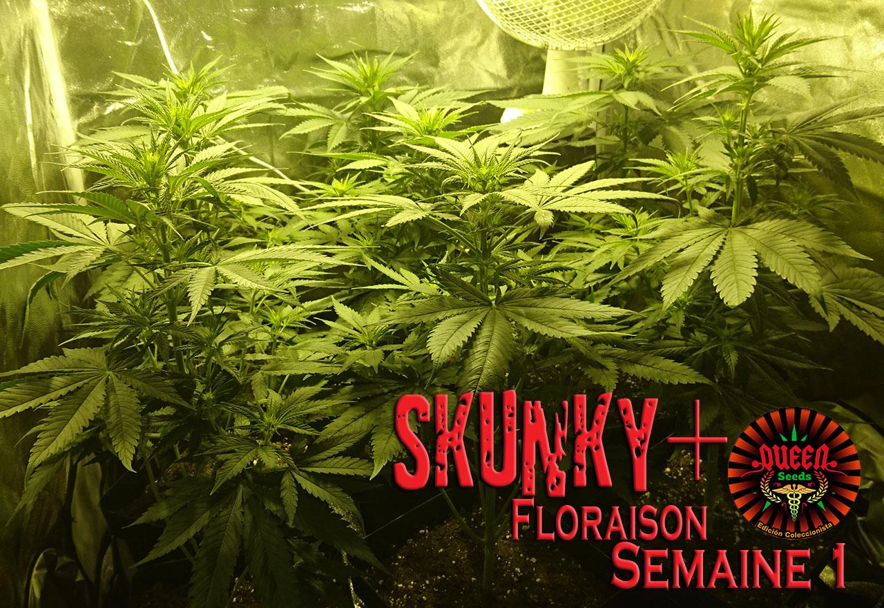 jour 1 flo skunky 2