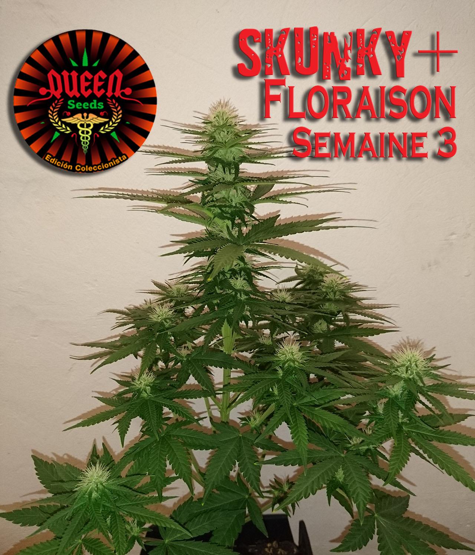 jour 22 flo skunky 3