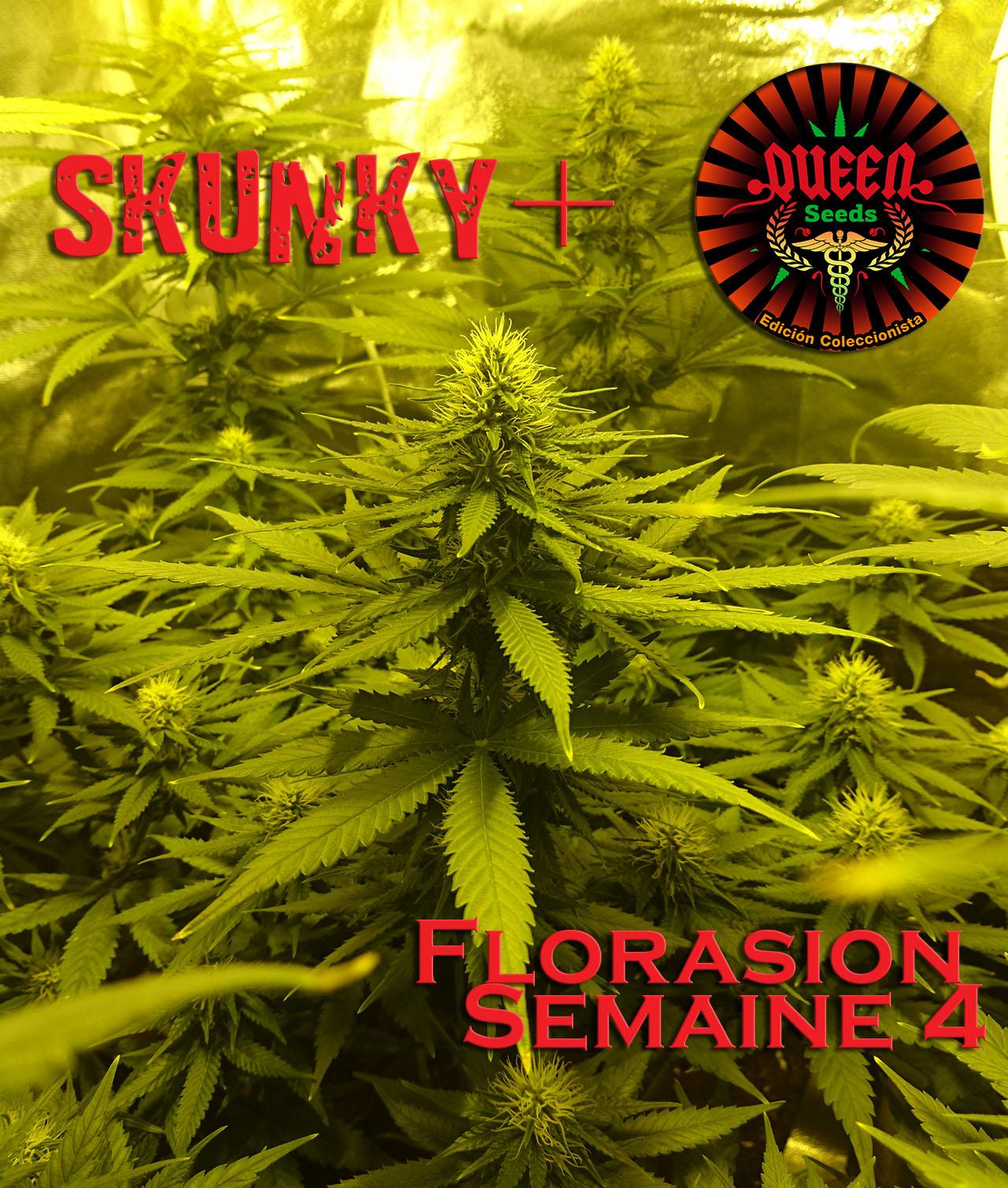 jour 30 flo skunky 4