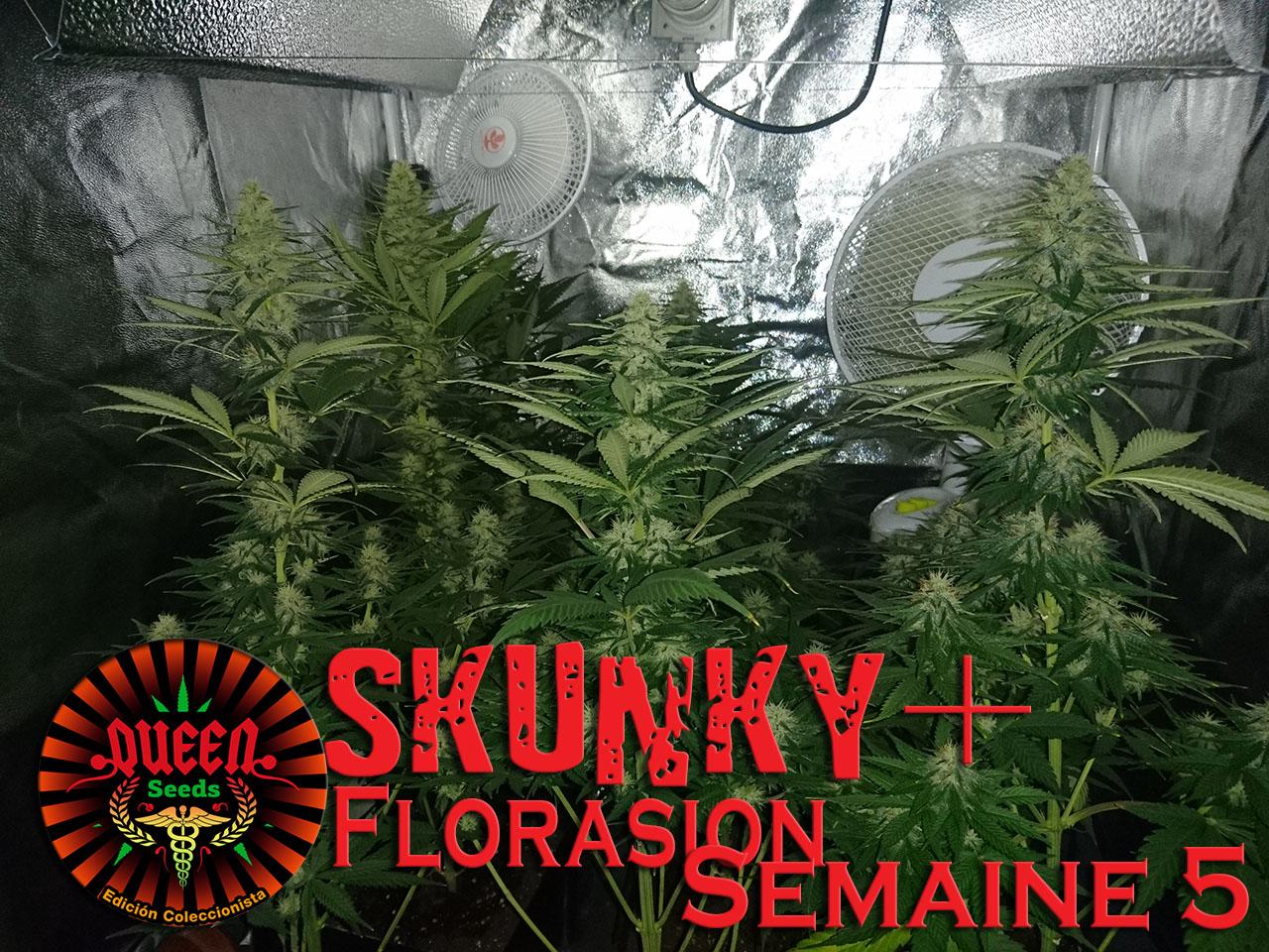 jour 40 flo skunky