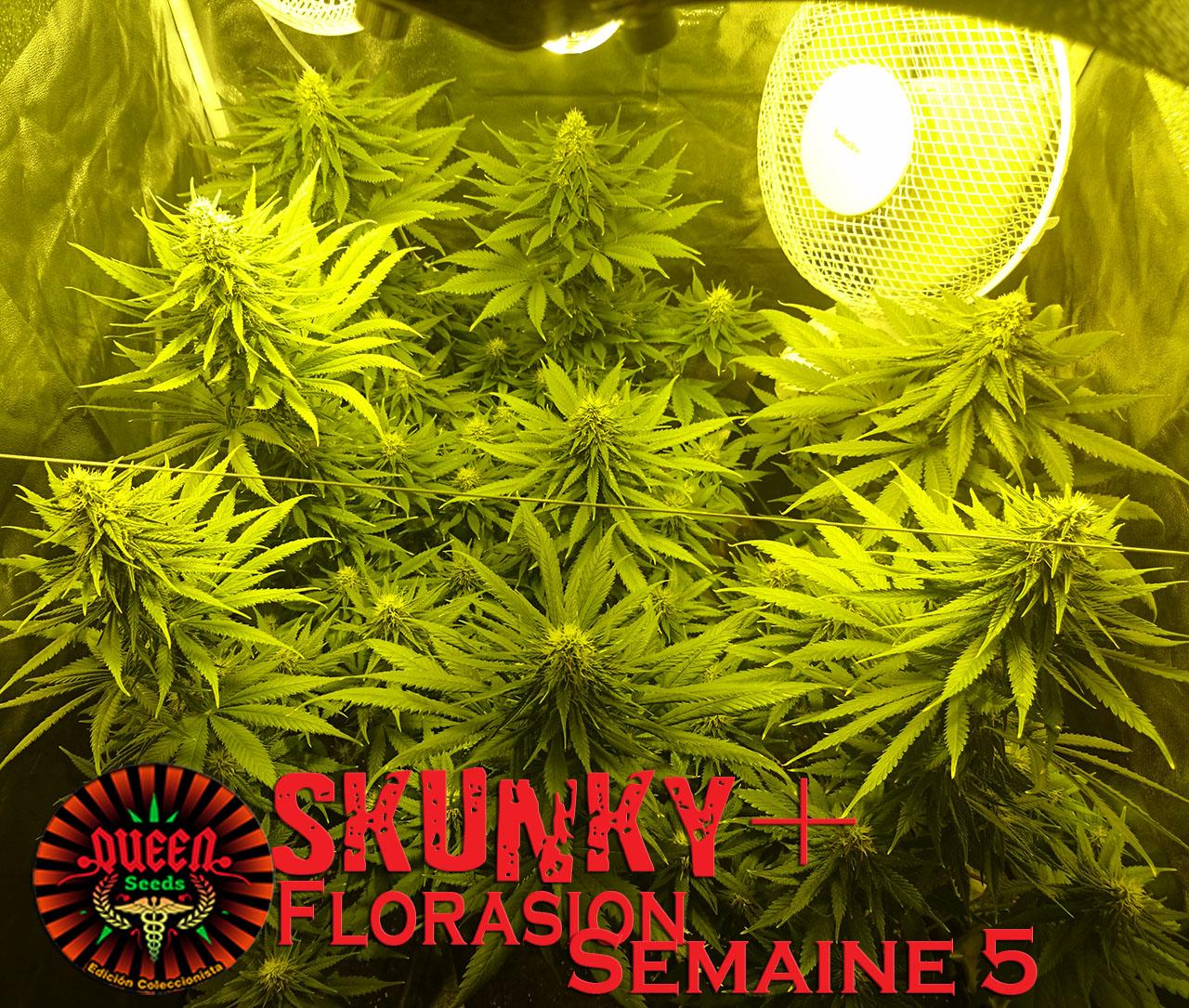 jour 40 flo skunky 2
