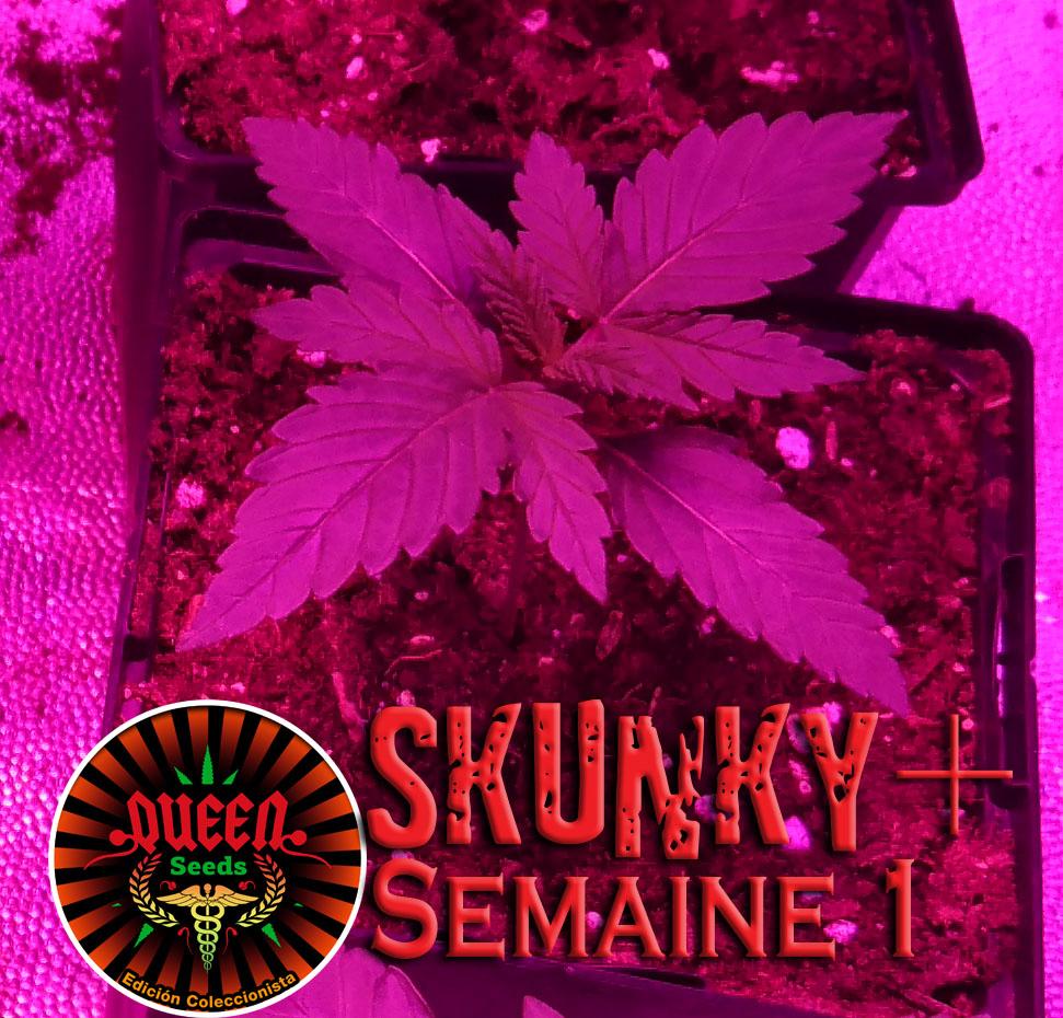 jour 7 skunky 2